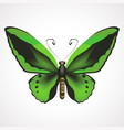 green butterfly with outstretched wings vector image vector image
