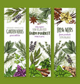 herb and spice fresh garden food sketch banner vector image vector image