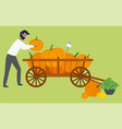 man and pumpkins in wheelbarrow autumn harvest vector image