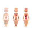 People internal organs anatomy structure