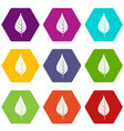 apple tree leaf icon set color hexahedron vector image vector image