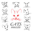 cats muzzle set vector image