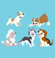 dog cartoon set vector image