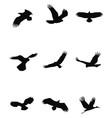 Bird Silhouette Set vector image vector image