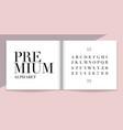elegance font and alphabet set lettering design vector image