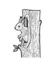 squirrel in a hollow sketch vector image vector image