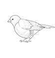A monochrome sketch of titmouse vector image