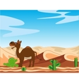 Desert and camel vector image vector image