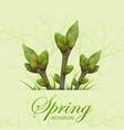 three spring twigs vector image vector image