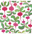 beetroot seamless pattern vector image
