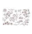 bundle elegant detailed natural drawings of vector image vector image