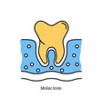 linear isolated icon - molar icon vector image vector image