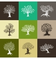 magnificent olive and oak trees silhouette vector image vector image
