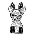 dog deer with glasses scarf horns coat vintage vector image