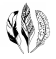 Feathers3 vector image vector image