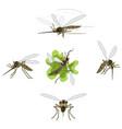 mosquito cartoons vector image