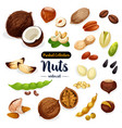 nuts seed bean cartoon icon set for food design vector image vector image