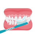 jaw with teeth and toothbrush icon flat style vector image