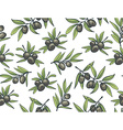 Black olives from branches on a white background vector image vector image