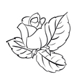 Blooming roses vector image