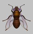 fly housefly vector image vector image