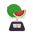 scale kitchen tool isolated icon vector image