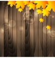 Autumn maple leaves on wooden background vector image vector image