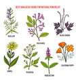 best analgesic natural herbs for pain relief vector image vector image
