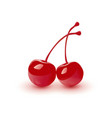 cocktail cherry isolated vector image vector image