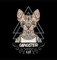 sphynx cat tattoo gangster vector image