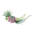 watercolor wreath of cacti and succulent vector image