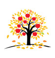 apple tree with yellow and orange leaves vector image vector image
