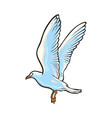 flying seagull hand drawn vector image vector image