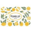 set of hand drawn citrus whole and vector image vector image