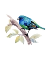 Exotic Bird on Tree Branch on White Background vector image vector image