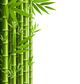 Green bamboo grove isolated on white vector image vector image