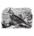 crested lark vintage vector image vector image
