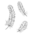 Isolated feathers and quills vector | Price: 1 Credit (USD $1)