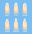 set of nails shapes vector image