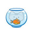 kitten looks at goldfish in aquarium vector image