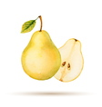 Pear hand drawn watercolor vector image