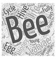 The Life Cycle of the Honey Bee Word Cloud Concept vector image vector image