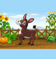 cartoon happy donkey in the farm vector image vector image