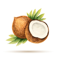 Coconut hand drawn watercolor vector image