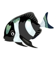 Black and white striped tropical fish isolated vector image