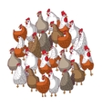 Birds color chicken group isolated on white vector image vector image