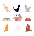 cute cats flat set vector image