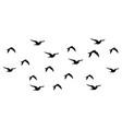 flock birds set design vector image vector image