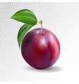 red plum on a tranparent background quality vector image vector image
