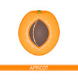 apricot isolated on white vector image